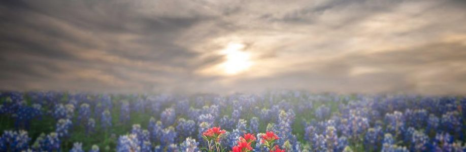 Texas Hill Country Cover Image